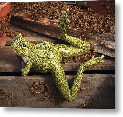 Metal Print featuring the photograph A Frog's Life by Patrice Zinck