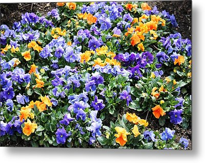 Metal Print featuring the photograph A Garden Of Lovely Little Faces by Judy Palkimas
