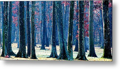 Metal Print featuring the photograph A Gathering Of Trees by Angela Davies