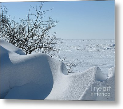 Metal Print featuring the photograph A Gentle Beauty by Ann Horn