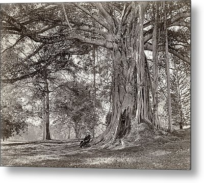 A Gentleman Sitting Beneath A Large Native Tree In British Ceylon Metal Print by Scowen and Co