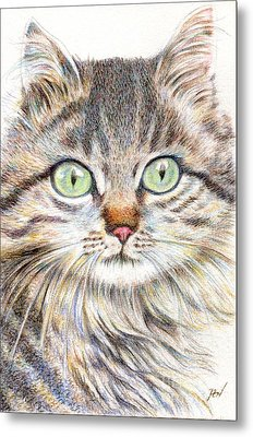 A Handsome Cat  Metal Print