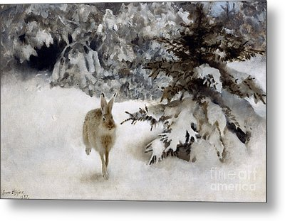 A Hare In The Snow Metal Print by Bruno Andreas Liljefors