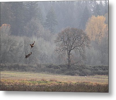 A Hawk's Paradise Metal Print by Angie Vogel
