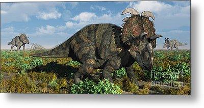 A Herd Of Albertaceratops Metal Print by Mark Stevenson