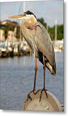 A Heron In The Marina Metal Print