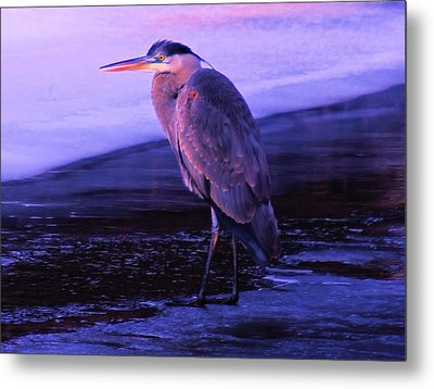 A Heron On The Moyie River Metal Print by Jeff Swan