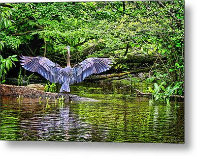 Metal Print featuring the photograph A Heron Touches Down by Eleanor Abramson
