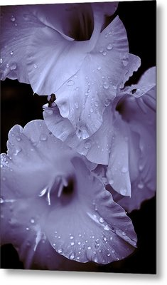 A Hint Of Purple Metal Print by Peggie Strachan