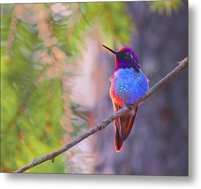 A Hummingbird Resting In The Evening Light. Metal Print