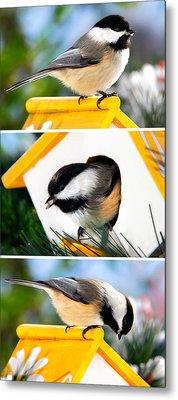 A Little Bird Told Me - Three Chickadees Triptych Metal Print