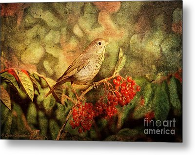 A Little Bird With Plumage Brown Metal Print by Lianne Schneider