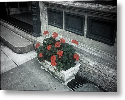 Metal Print featuring the photograph A Little Color In A Drab World by Rodney Lee Williams