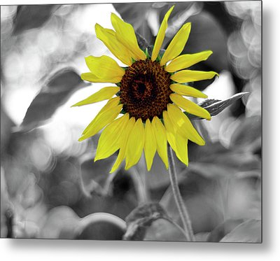 'a Little Color In Your Day' Metal Print