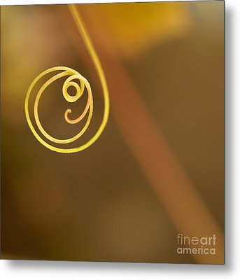 A Little Curl Metal Print by Sabrina L Ryan
