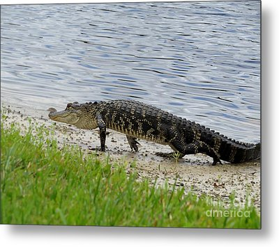 A Little Guy Metal Print by Zina Stromberg
