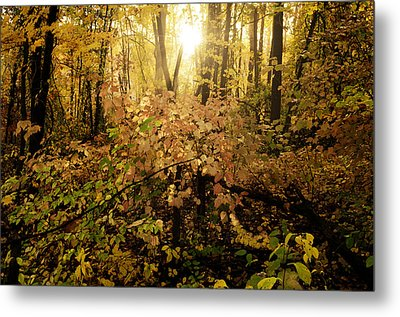 A Little Morning Light Metal Print