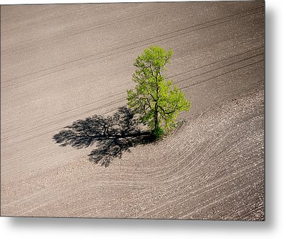A Lone Tree In A Newly Seeded Corn Field. Richmond Ontario Dairy Farm. Metal Print by Rob Huntley
