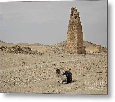 A Lonely Camel Metal Print by Cendrine Marrouat