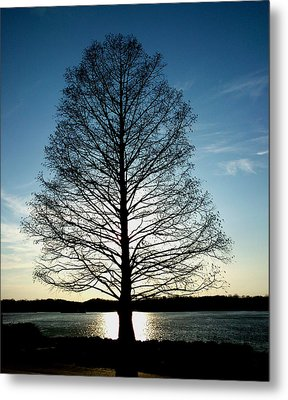 Metal Print featuring the photograph A Lonely Tree by Lucy D