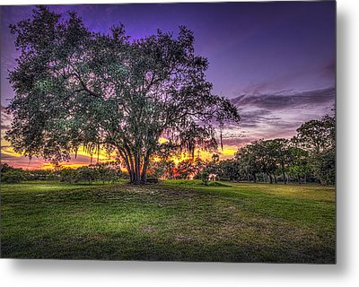 A Look Back Metal Print by Marvin Spates