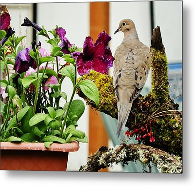 Metal Print featuring the photograph A Lovely Morning by VLee Watson