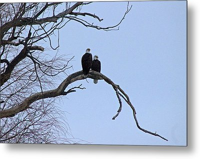 A Majestic Pair Metal Print by Rhonda Humphreys