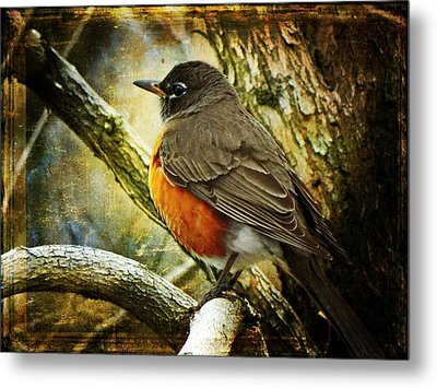A Moment For Mother Robin Metal Print by Leah Moore