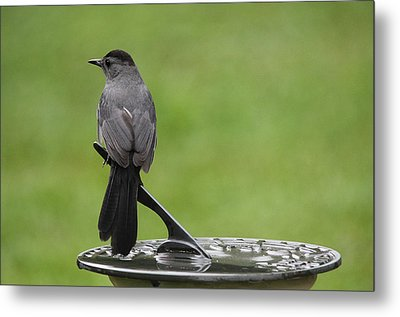 Metal Print featuring the photograph A Moment In Time by Trina  Ansel