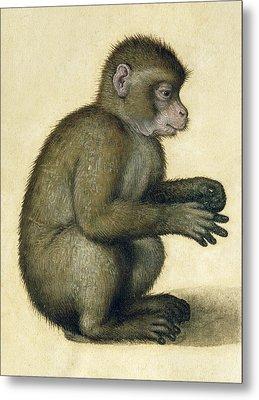 A Monkey Metal Print by Albrecht Durer