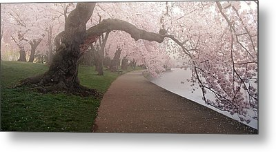 A Morning To Remember Metal Print by Bernard Chen