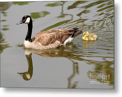 A Mother's Love Metal Print by Bob and Jan Shriner