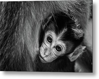 A Mother's Love Metal Print by Gunarto Song