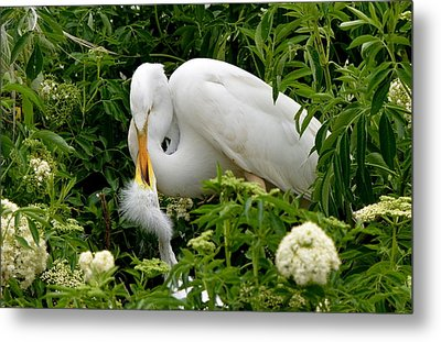 A Mothers Love Metal Print