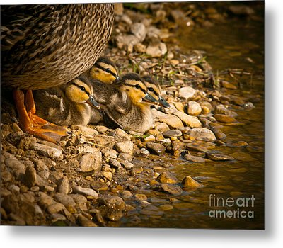 A Mother's Love Metal Print by Robert Frederick
