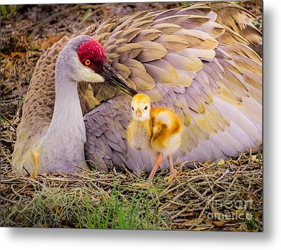 A Mother's Lovely Touch Metal Print by Zina Stromberg