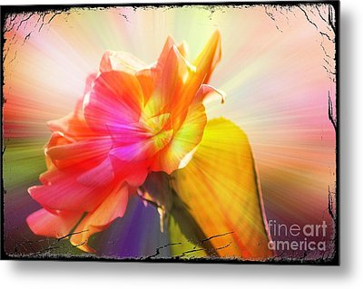 Metal Print featuring the photograph A New Day by Lori Mellen-Pagliaro