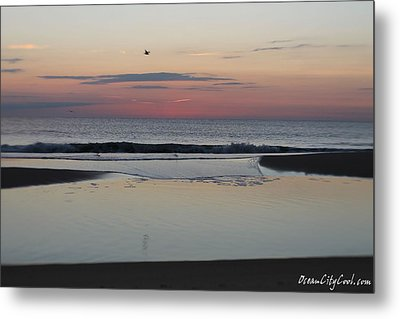 Metal Print featuring the photograph A One Seagull Sunrise by Robert Banach