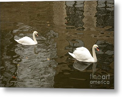 Metal Print featuring the photograph A Pair Of Swans Bruges Belgium by Imran Ahmed