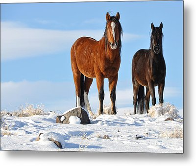 Metal Print featuring the photograph A Pair Of Wild Mustangs In Snow by Vinnie Oakes