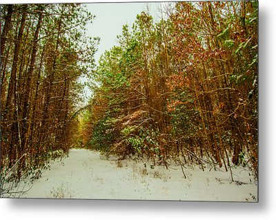 A Path In Winter  Metal Print