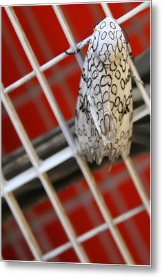 A Patterned Perch Metal Print by Ismael Cavazos