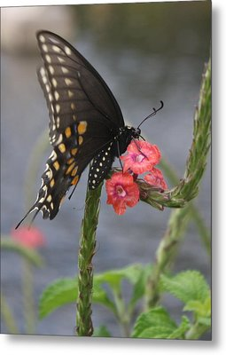 A Pause In Flight Metal Print