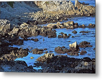 A Pelican's Rocky Retreat Metal Print by Susan Wiedmann