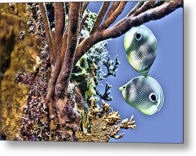 Two Butterfly Fish And Coral Reef Metal Print by Paula Porterfield-Izzo