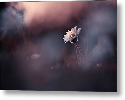 A Poor Lonesome Paquerette Metal Print