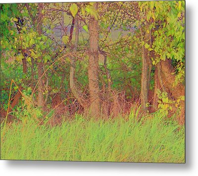 A Quiet Place Metal Print by Shirley Moravec