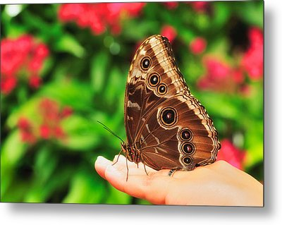 A Random Walk In The Butterfly Garden Metal Print by Photography  By Sai