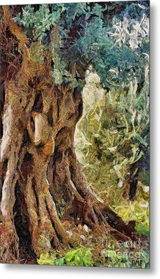 A Really Old Olive Tree Metal Print by Dragica  Micki Fortuna