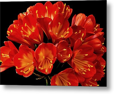 A Red Bouquet Metal Print by Marwan Khoury